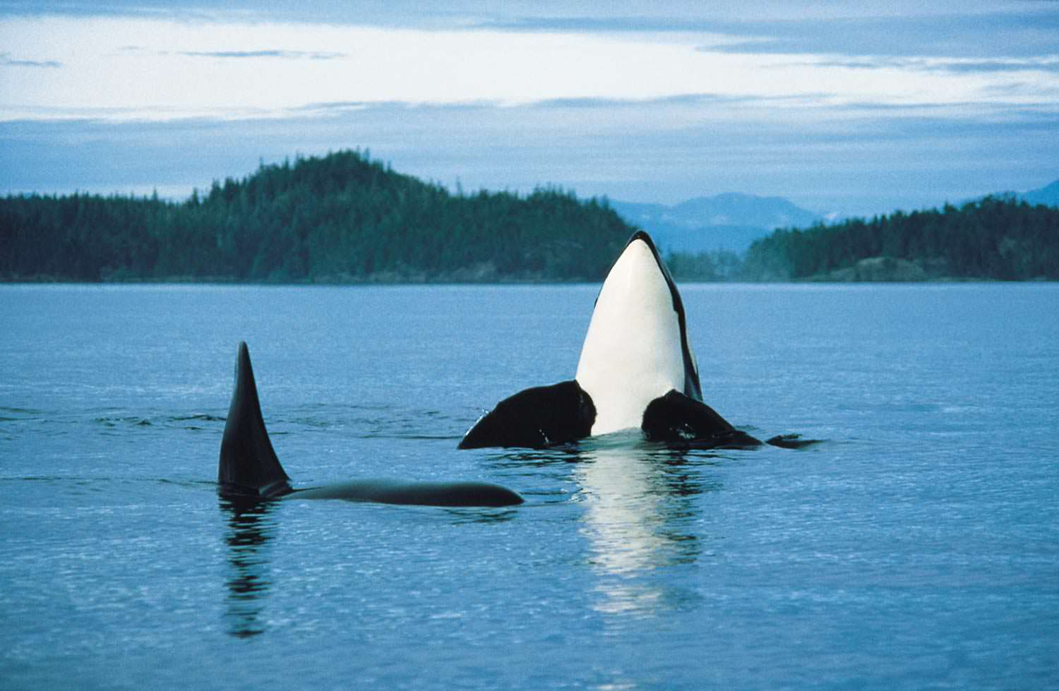 Whale Watching British Columbia